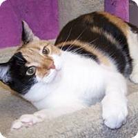 Adopt A Pet :: Athena - Colorado Springs, CO