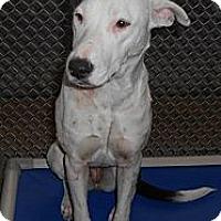 Adopt A Pet :: Sunshine - Leesburg, VA