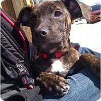Adopt A Pet :: Huntlee - Silver Lake, WI