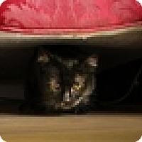Adopt A Pet :: Amber - Vancouver, BC