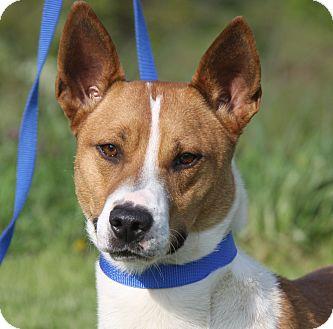 Hound (Unknown Type) Mix Dog for adoption in Marietta, Ohio - Courage (Neutered)