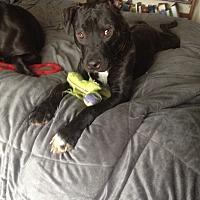 Adopt A Pet :: Beauford - Concord, CA