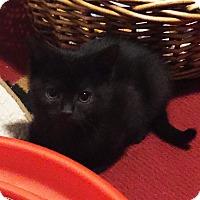 Adopt A Pet :: Ceres - N. Billerica, MA