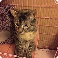 Adopt A Pet :: Bailey - Clay, NY