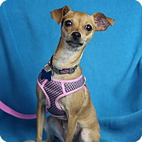 Adopt A Pet :: Holly - Minneapolis, MN