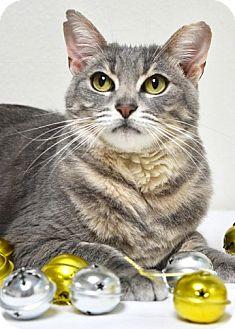 Domestic Shorthair Cat for adoption in Dublin, California - Charlie