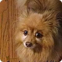 Adopt A Pet :: Bart - Franklinton, NC