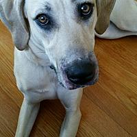 Adopt A Pet :: Maggie - Morganton, NC