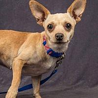 Adopt A Pet :: Mimi - Davis, CA