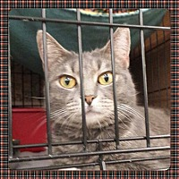 Adopt A Pet :: Merlin - Coshocton, OH