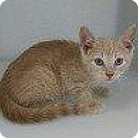 Adopt A Pet :: MAX FACTOR - Hampton, VA