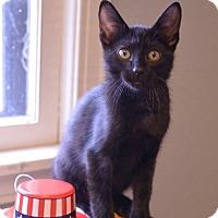 Adopt A Pet :: Ethan - Independence, MO