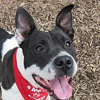 Adopt A Pet :: Zena - Flint, MI