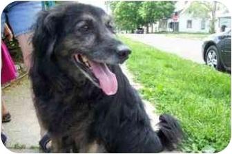 Australian Shepherd Mix Dog for adoption in Marion, Indiana - OSCAR