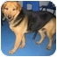 Photo 1 - German Shepherd Dog Mix Dog for adoption in Lubbock, Texas - Buddy Too