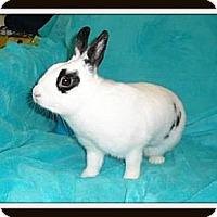 Adopt A Pet :: Tess - Williston, FL