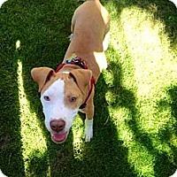 Adopt A Pet :: Milo - New Orleans, LA