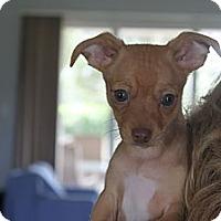 Adopt A Pet :: BUSTER - Loxahatchee, FL