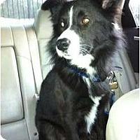 Adopt A Pet :: Lucky - Kingwood, TX