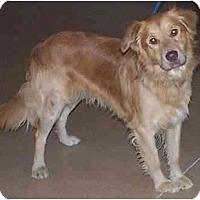 Adopt A Pet :: Jack - Toronto/Etobicoke/GTA, ON