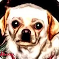 Adopt A Pet :: Athena-NY - Edmeston, NY