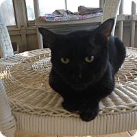 Adopt A Pet :: Jupiter - New Port Richey, FL