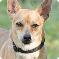 Adopt A Pet :: Jay Jay - Ormond Beach, FL