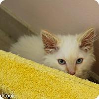 Adopt A Pet :: Waldo - Ann Arbor, MI