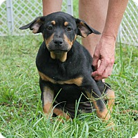 Adopt A Pet :: Mary Ann - Hagerstown, MD
