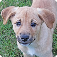 Adopt A Pet :: Copper - PENDING - in Maine - kennebunkport, ME