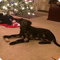 Adopt A Pet :: Walter - Lancaster, PA