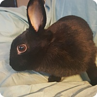 Adopt A Pet :: Nellie - Conshohocken, PA