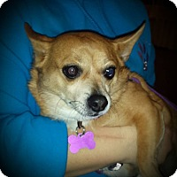 Adopt A Pet :: Buddy ~ Adoption Pending - Youngstown, OH