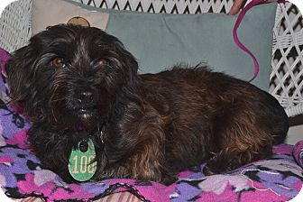 Terrier (Unknown Type, Small) Mix Dog for adoption in Beaumont, Texas - Willow