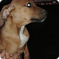 Adopt A Pet :: Freya - Ogden, UT