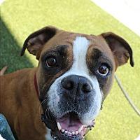 Adopt A Pet :: Samba - Burbank, CA