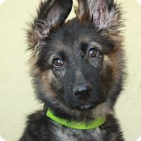 Adopt A Pet :: Blanche von Hercules - Los Angeles, CA