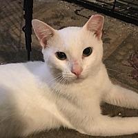 Adopt A Pet :: Volta - St. Louis, MO