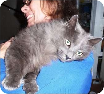 Domestic Longhair Cat for adoption in E. Claridon, Ohio - Smoky