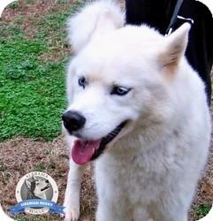 Siberian Husky Dog for adoption in Clay, Alabama - Tekkonna