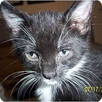 Adopt A Pet :: Chachi - Cleveland, OH