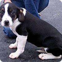 Adopt A Pet :: Chokito - Byrdstown, TN
