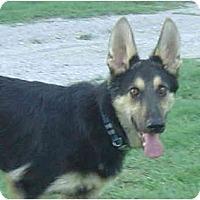 Adopt A Pet :: Dag - Pike Road, AL
