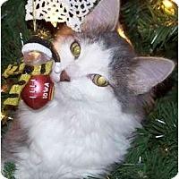 Adopt A Pet :: Ella - Mesa, AZ