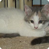 Adopt A Pet :: OPAL - Acme, PA