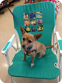 Terrier (Unknown Type, Small) Mix Dog for adoption in Lehigh, Florida - Pluto