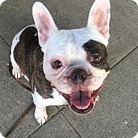 Adopt A Pet :: Paco - Van Nuys, CA