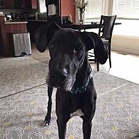 Adopt A Pet :: Nilla - Gallatin, TN