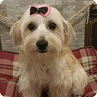 Adopt A Pet :: Marcy - Brea, CA