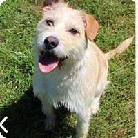 Adopt A Pet :: Alfie - Newport, KY